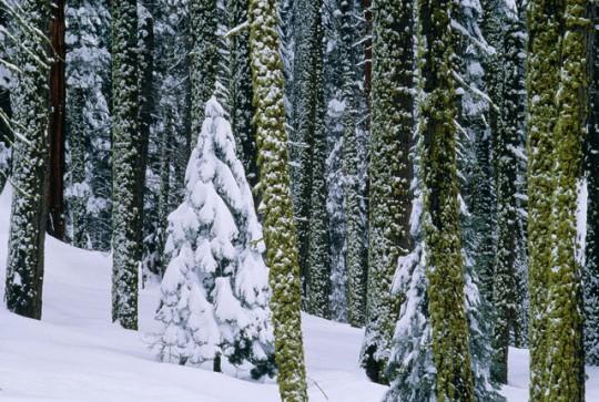 bosco sotto la neve