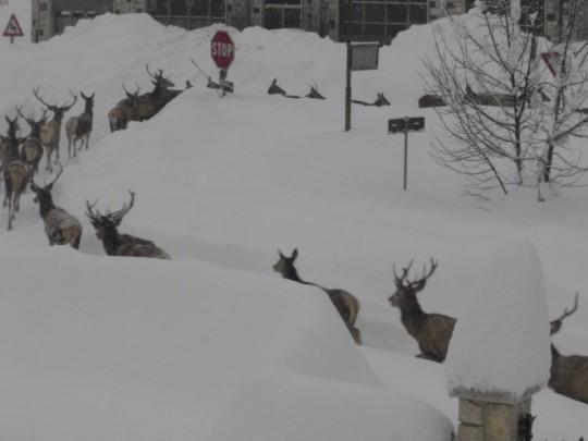 cervi e neve