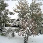 abetone alberi nevicata 28 29 ottobre