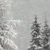 Sta Nevicando su tutto l'Arco Alpino, neve anche a 1200m