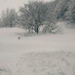 Segnaletica stradale sepolta dalla Neve