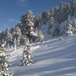 Abeti innevati Alpe Cermis - Credits Margherita Cenni (15)