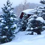Livigno alberi neve