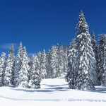 Neve fresca Altopiano di Asiago - Bosco innevato