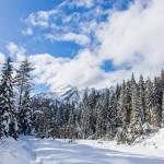 Bosco Sappada Plodn Dolomiti - copyright Studio WLTP