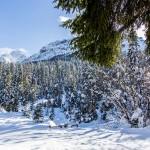 Inverno Sappada Plodn Dolomiti - copyright Studio WLTP