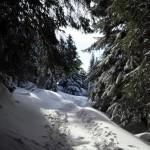 sentieri nella neve Aprica