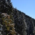 autunno: neve sugli alberi