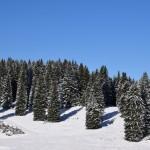 bosco e neve