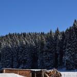 Depositi legna a Campolongo