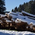 tronchi di legno sotto la neve